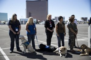 An image of therapy dogs and their handlers in Las Vegas